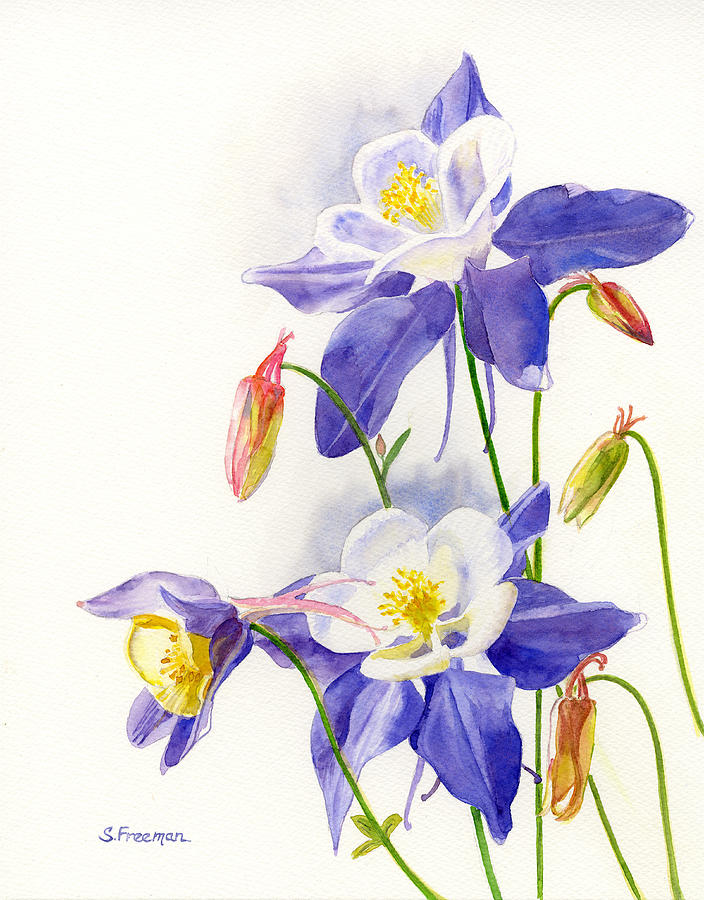 Blue Columbine Blossoms Painting