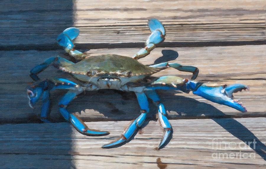Blue Crab Madness Photograph