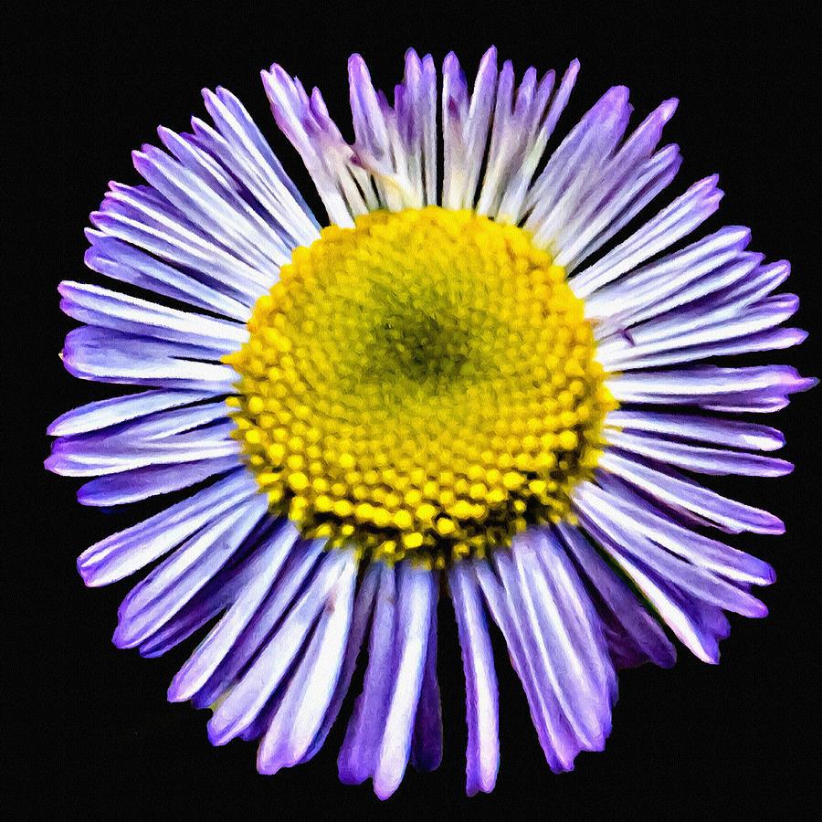Blue Daisy Painting Photograph