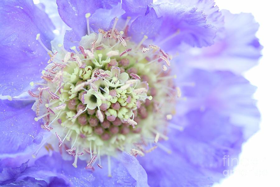 Blue Dream Photograph