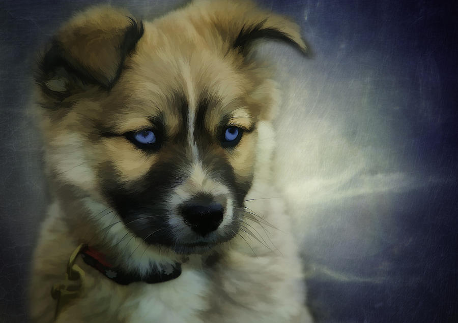 Dog Photograph - Blue Eyes by Jacque The Muse Photography