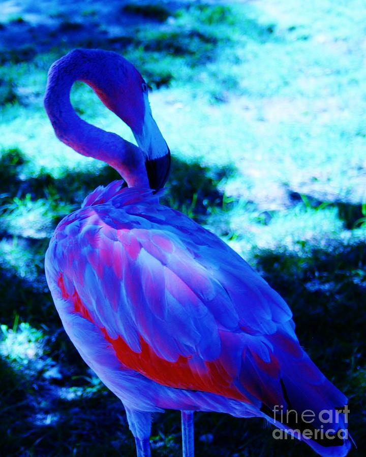 Blue Flamingo is a photograph by Dawn Downour which was uploaded on ...: fineartamerica.com/featured/blue-flamingo-dawn-downour.html