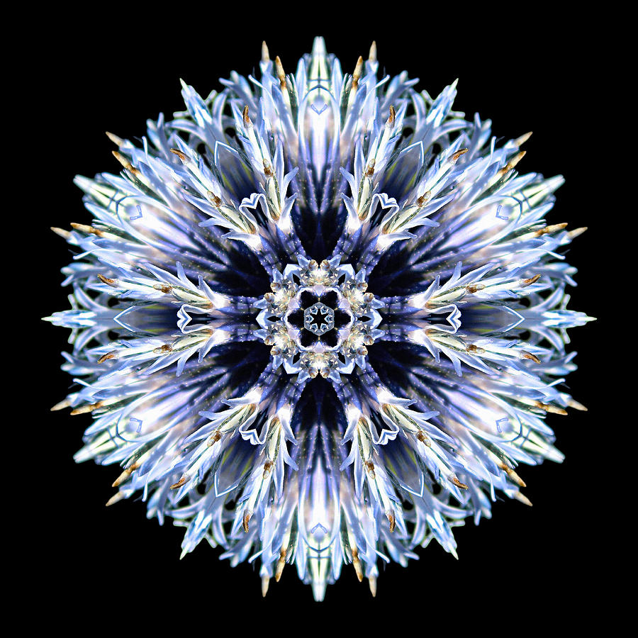 Blue Globe Thistle Flower Mandala Photograph