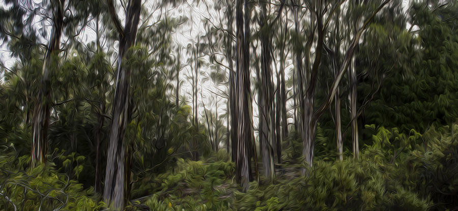 Nature Photograph - Blue Gum Eucalyptus Forest by Brad Scott