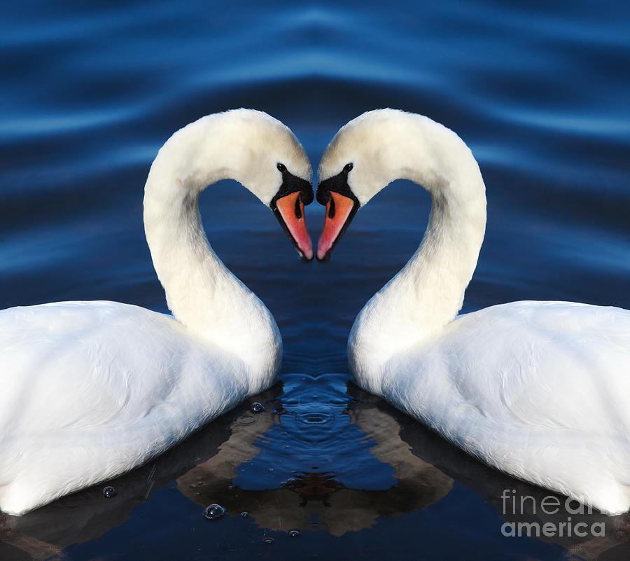 Blue Heart Photograph