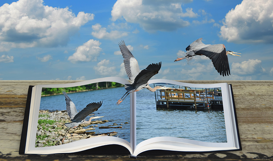 Great Blue Heron Photograph - Blue Heron Storybook by Steven  Michael