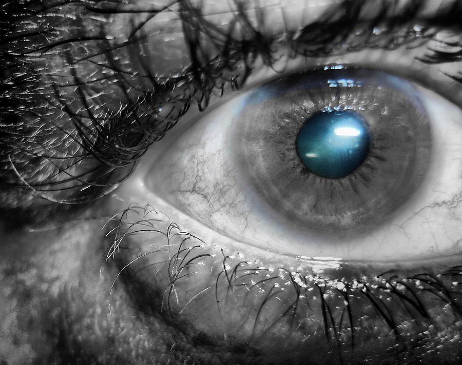 Blue Iris Photograph