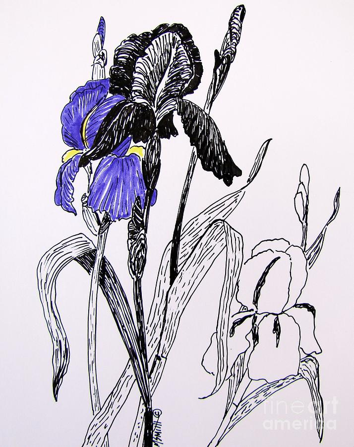 Blue Iris Drawing