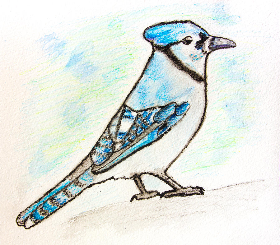 Blue birds drawings