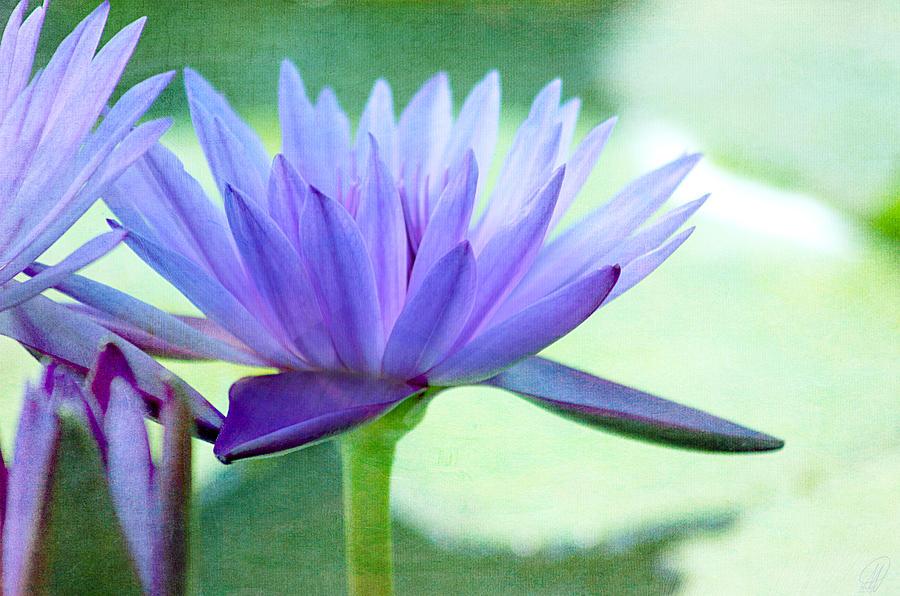 Blue Lily Digital Art