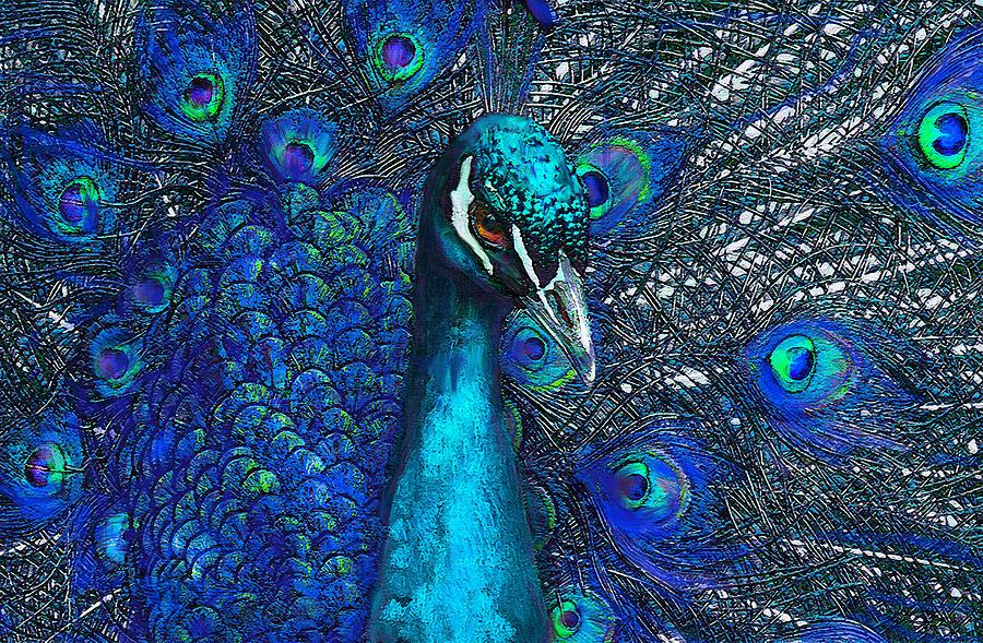 Traduction peacockblue français  Dictionnaire anglais