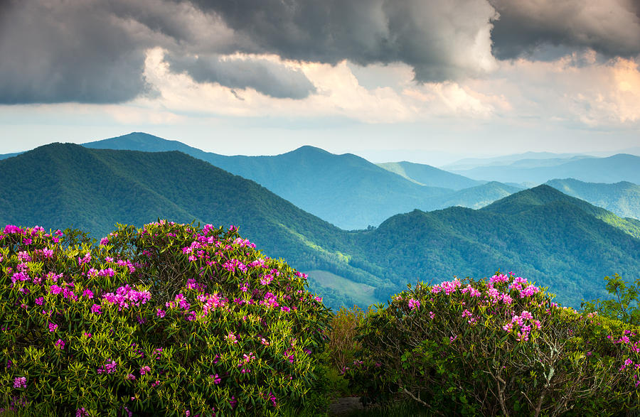 Roan Mountain Photograph - Blue Ridge Appalachian Mountain Peaks And Spring Rhododendron Flowers by Dave Allen