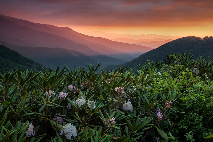 Blue Ridge Morning Photograph - Blue Ridge Morn With Rose Bay Rhododendron  by Rob Travis