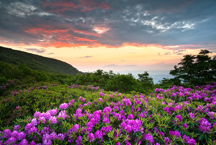 Blue Ridge Parkway Sunset - Craggy Gardens Rhododendron Bloom Photograph