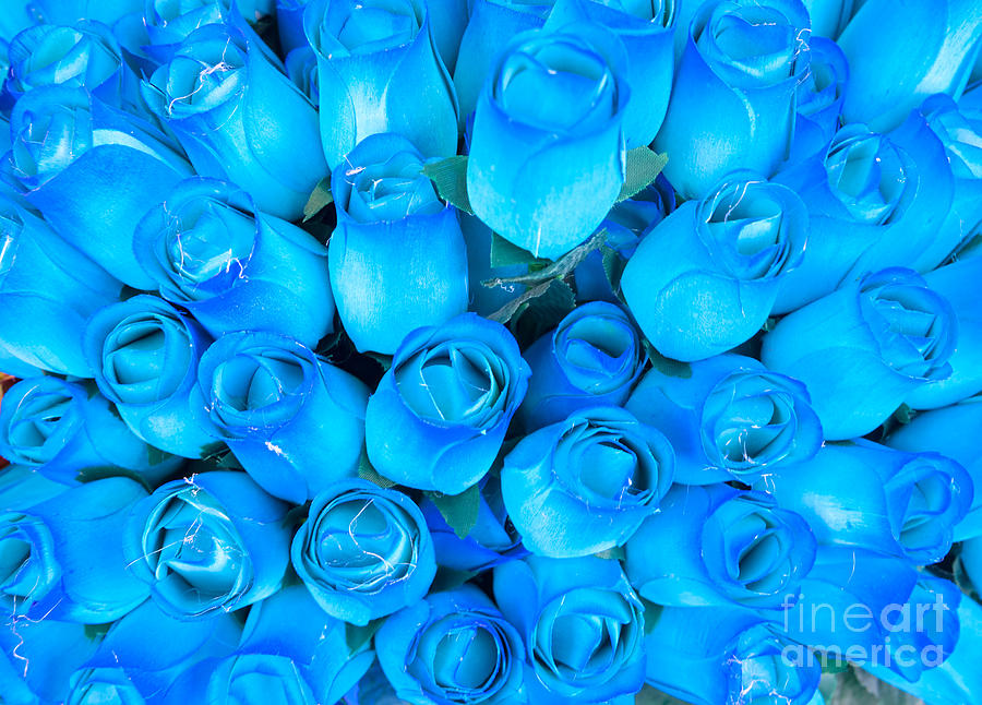 Blue Roses Background Photograph By Luciano Mortula