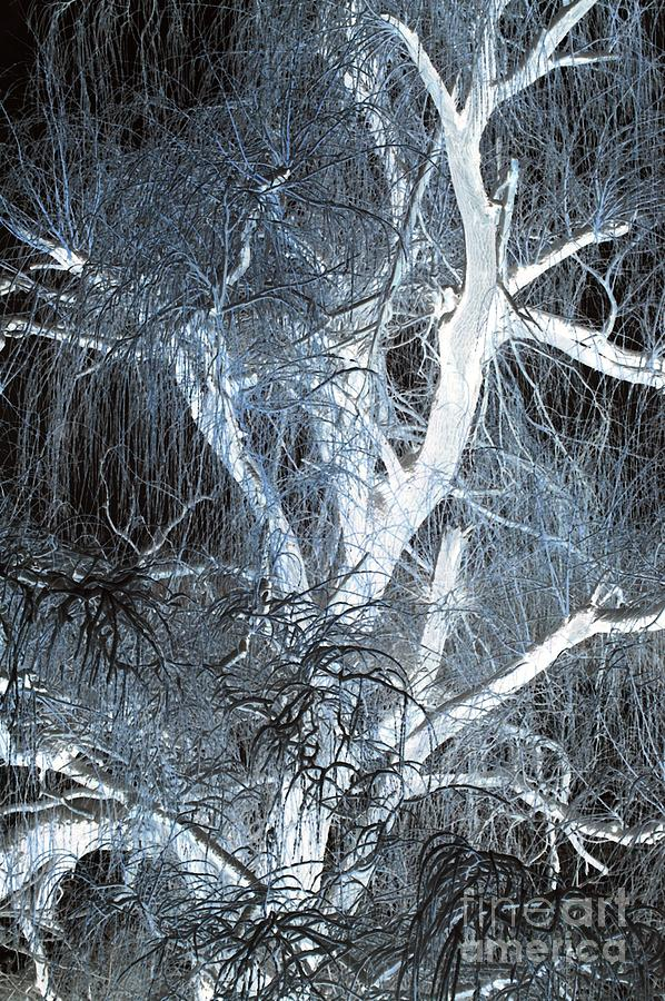 Blue Snow Photograph  - Blue Snow Fine Art Print