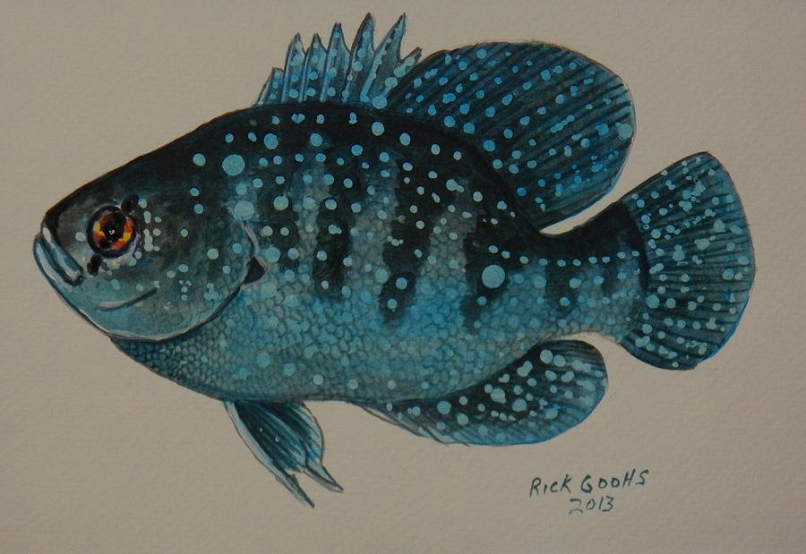Blue Spotted Sunfish Painting - Blue Spotted Sunfish by Richard Goohs