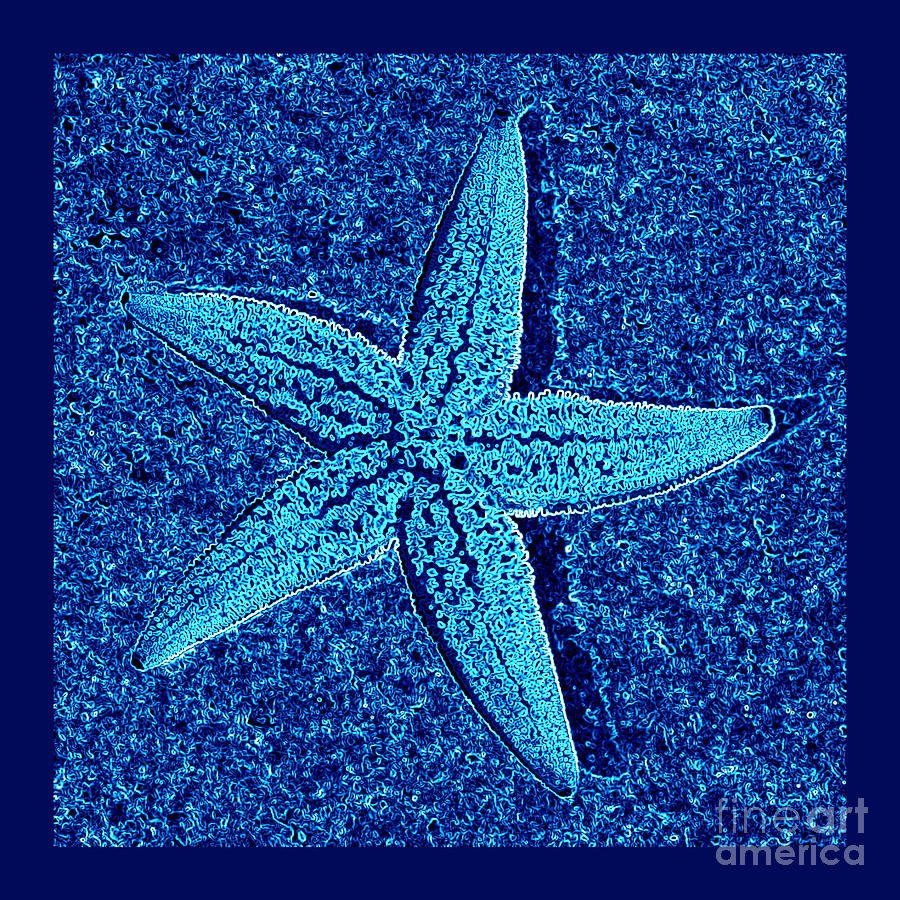 Blue Starfish - Digital Art Photograph  - Blue Starfish - Digital Art Fine Art Print