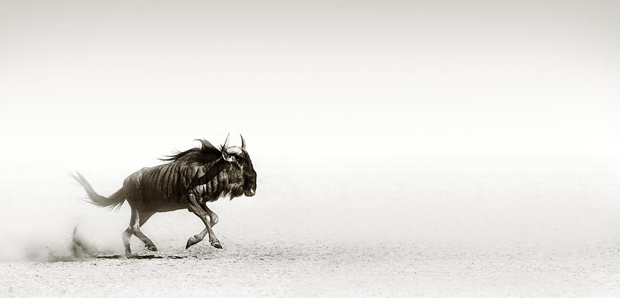 Blue Wildebeest In Desert Photograph By Johan Swanepoel