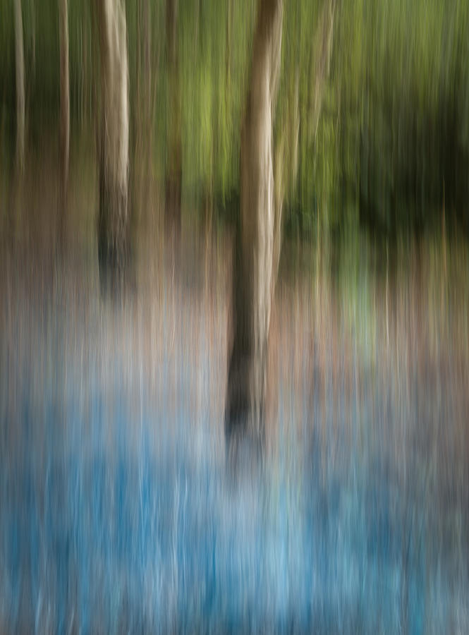 Bluebell Wood Photograph  - Bluebell Wood Fine Art Print