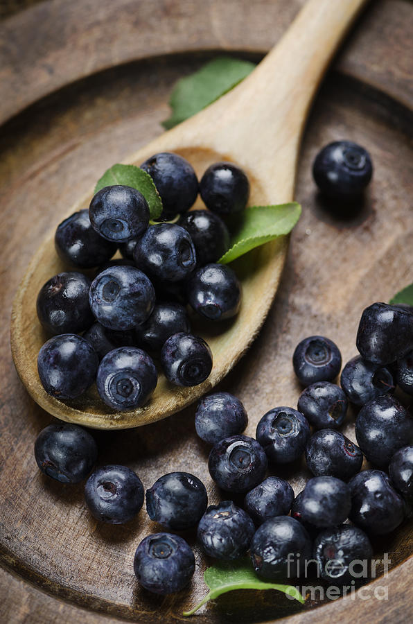 Blueberry Pyrography