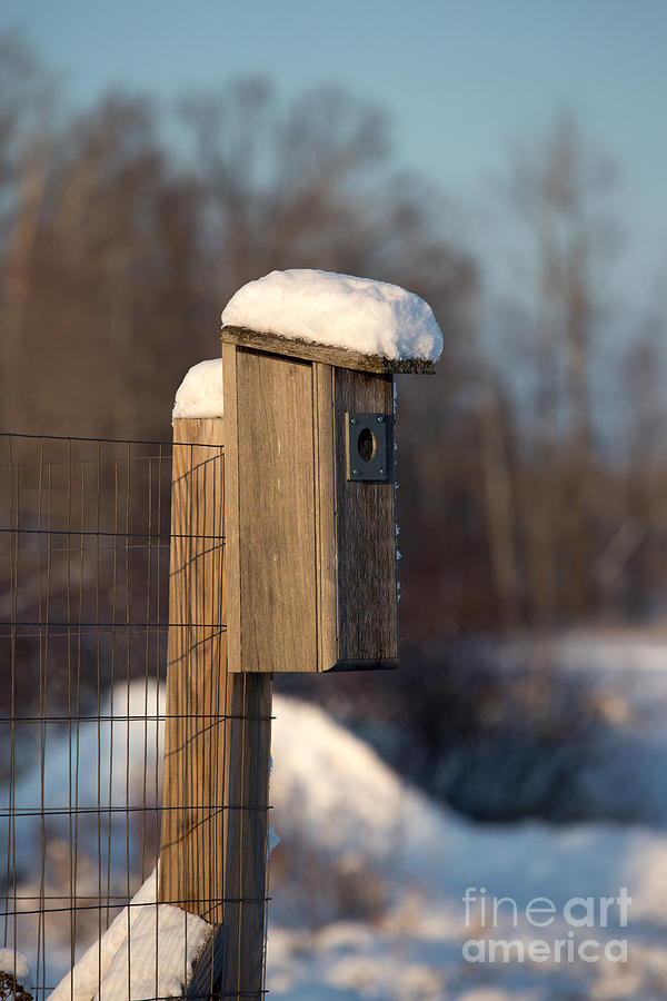 Bluebird House Covered With Snow Photograph