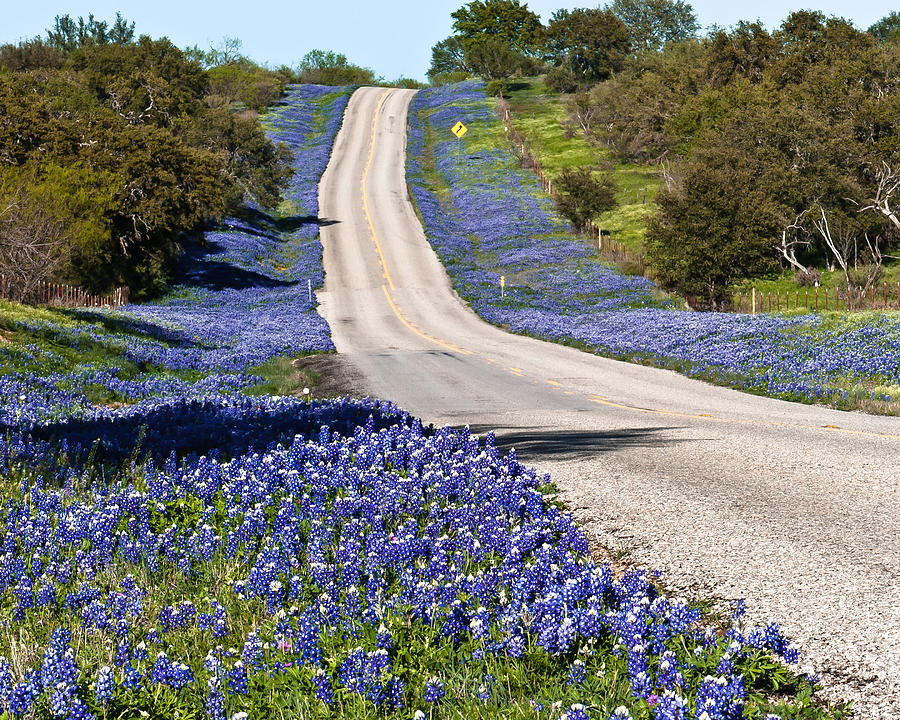 Bluebonnet Lined Hwy Photograph  - Bluebonnet Lined Hwy Fine Art Print