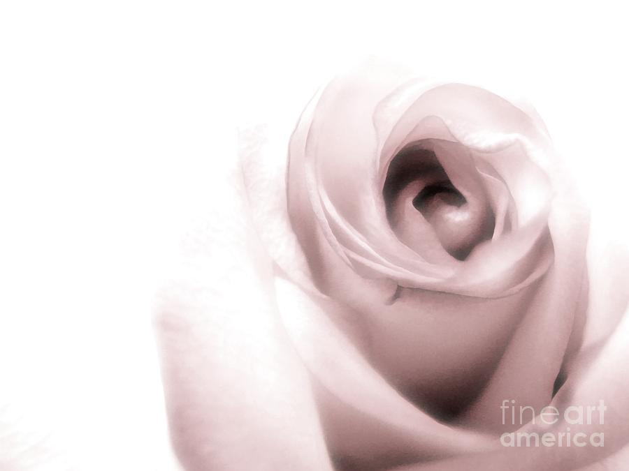 Blush Photograph  - Blush Fine Art Print