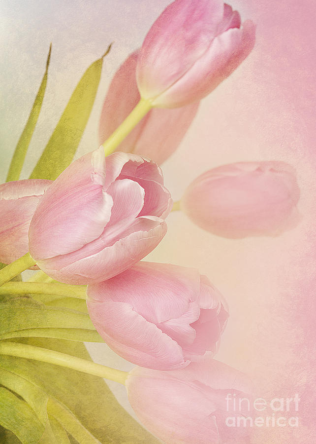 Blushing Beauties Photograph  - Blushing Beauties Fine Art Print