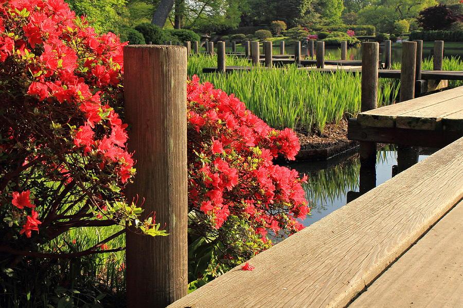 Garden Photograph - Boardwalk In Spring by Scott Rackers