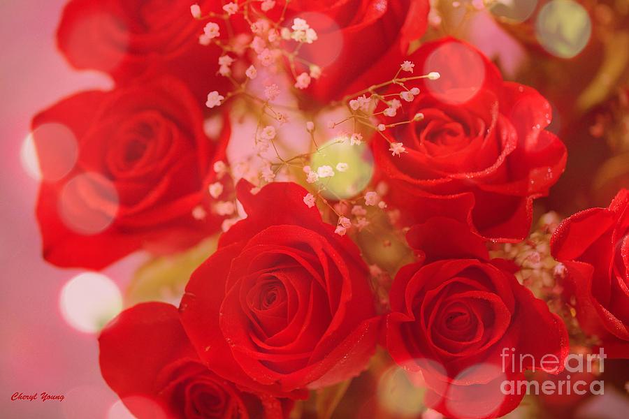 Bokeh Roses Photograph