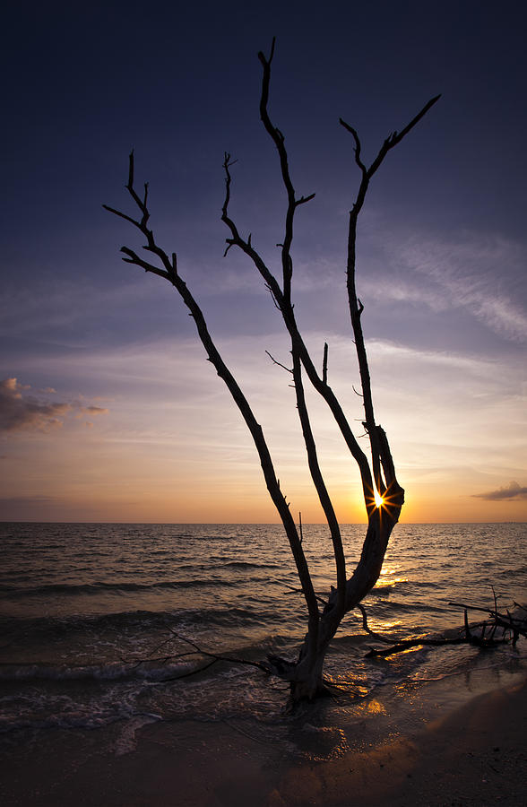 Bonita Beach Tree Photograph