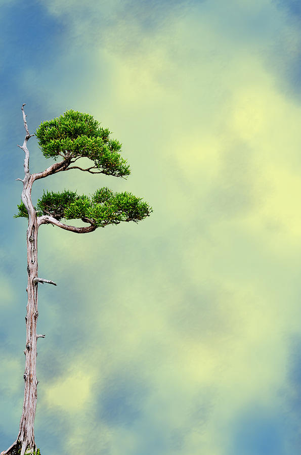 Bonsai Glow Photograph  - Bonsai Glow Fine Art Print