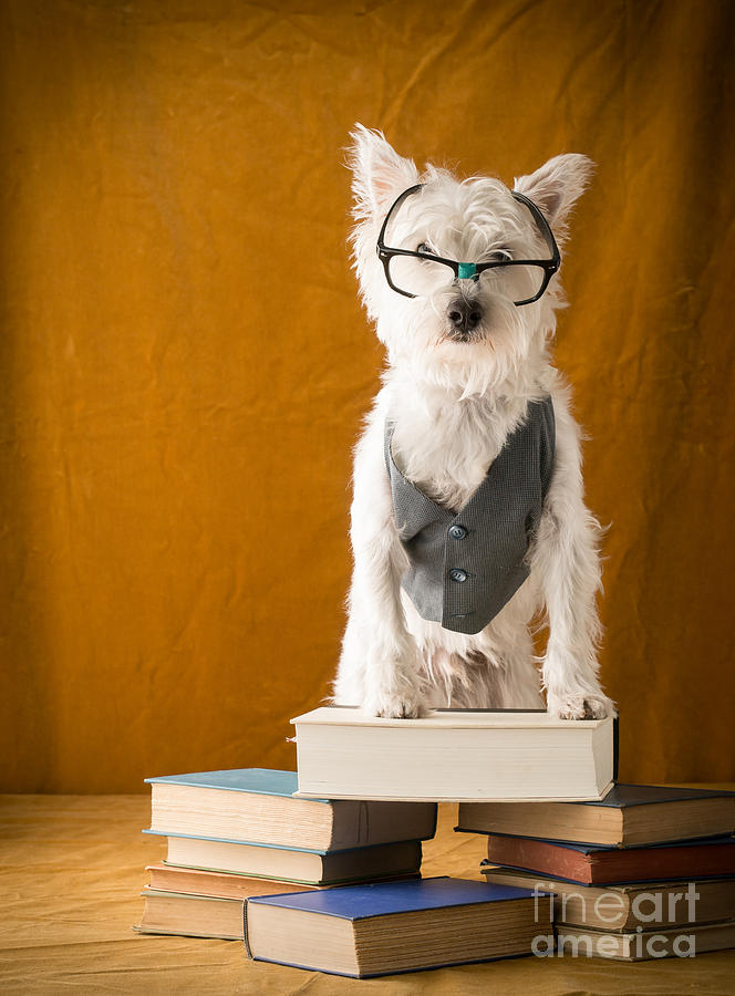 Bookish Dog Photograph  - Bookish Dog Fine Art Print