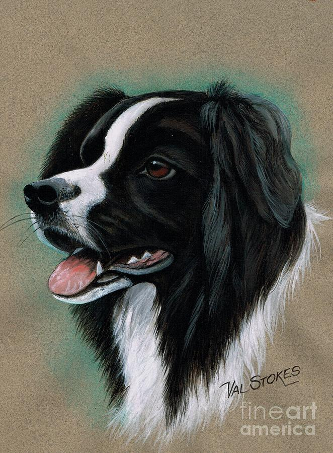 Border Collie Mixed Media