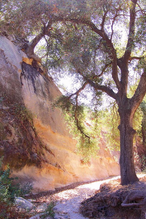 Borrego Canyon Trail Photograph