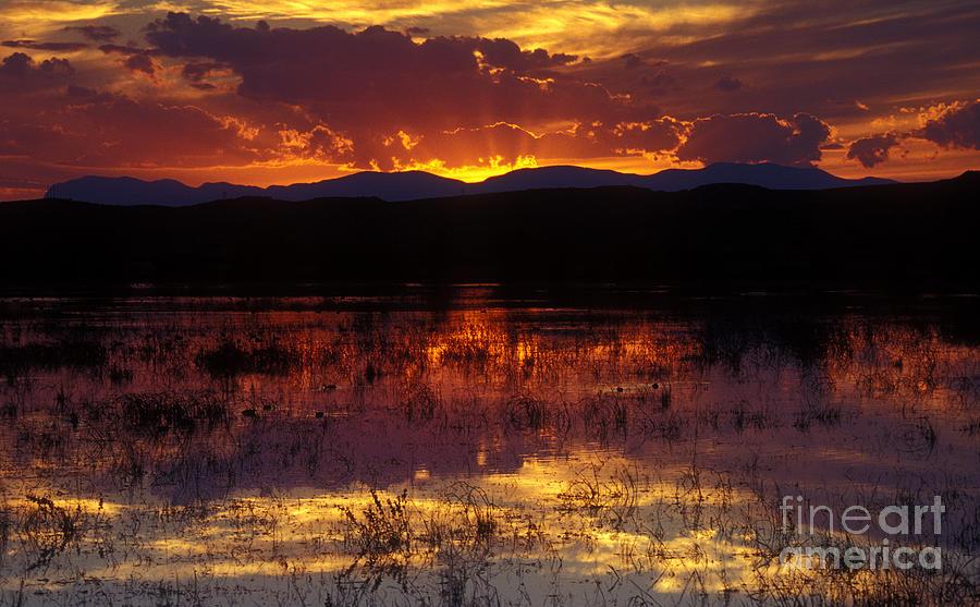 Bosque Photograph - Bosque Sunset - Orange by Steven Ralser