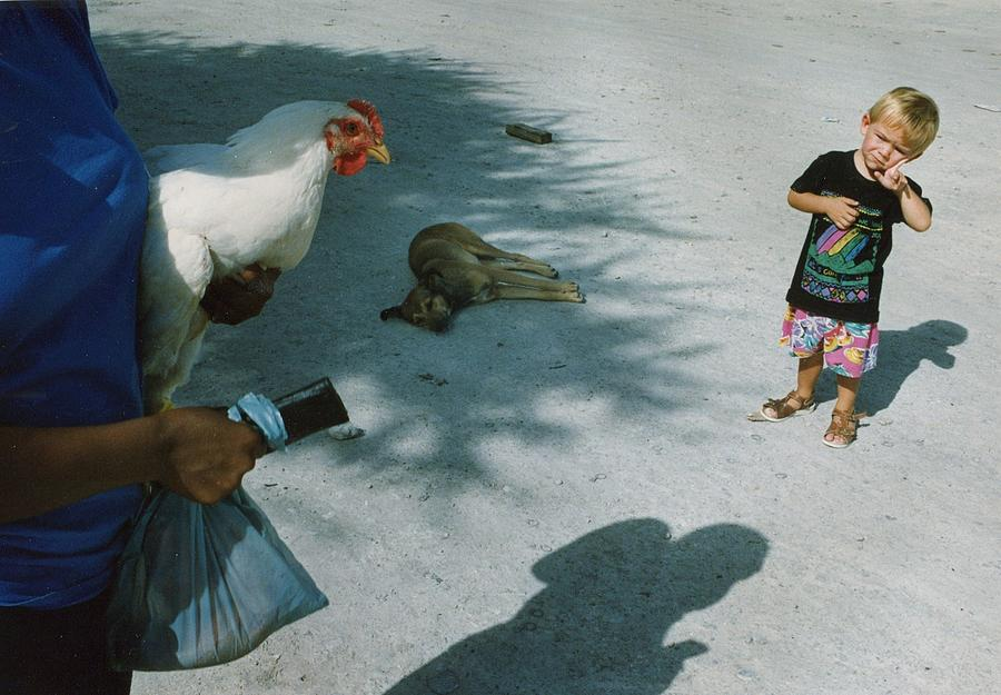 Chicken Photograph - Botswana 1994 by Rolf Ashby