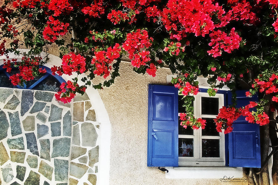 Bougainvillea Window  Photograph  - Bougainvillea Window  Fine Art Print
