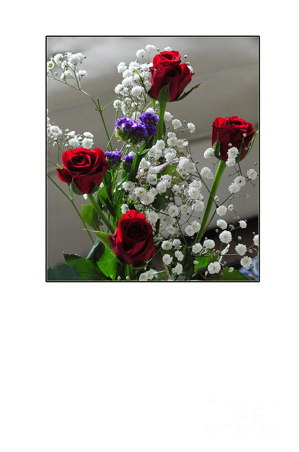 Bouquet In Red White And Blue Photograph  - Bouquet In Red White And Blue Fine Art Print
