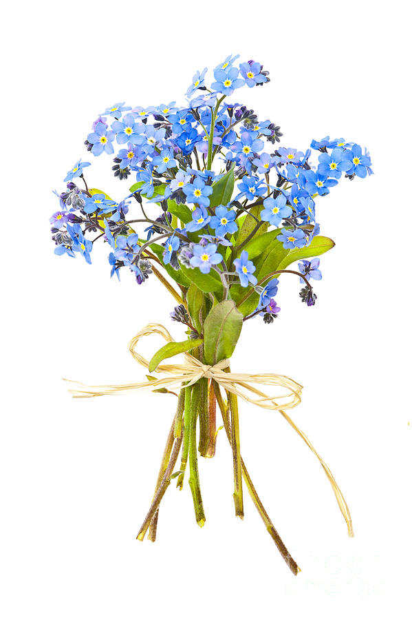 Bouquet Of Forget-me-nots Photograph  - Bouquet Of Forget-me-nots Fine Art Print