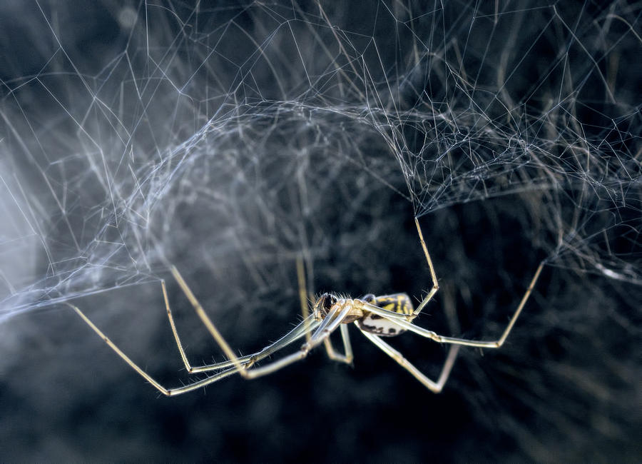 Bowl And Doily Weaver Spider is a photograph by Karl Barth which was ... Bowl And Doily Weaver Spider