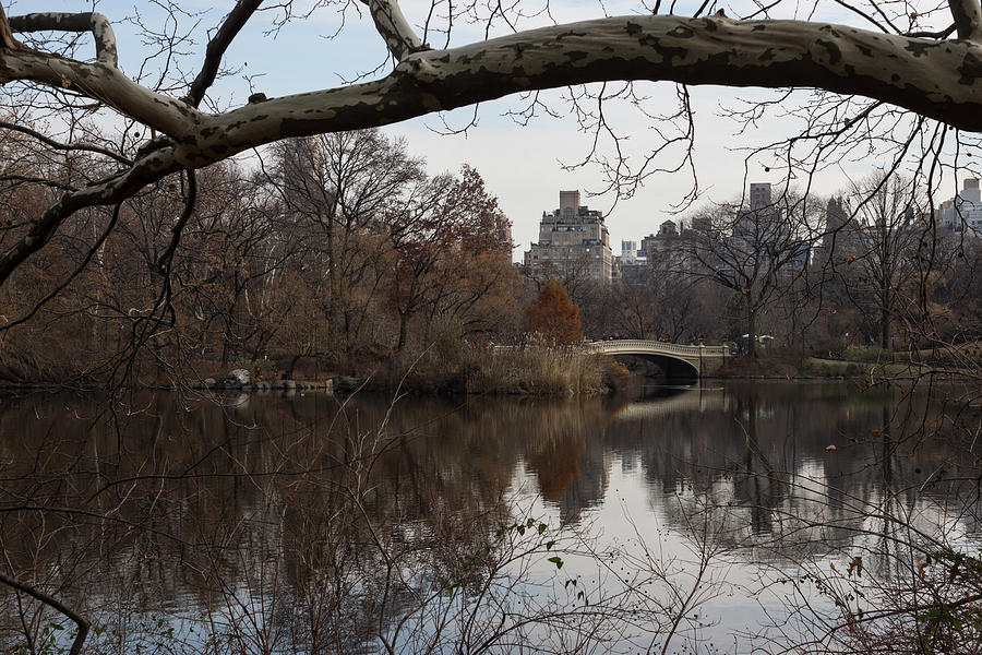 Bows Photograph - Bows And Arches - New York City Central Park by Georgia Mizuleva