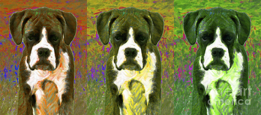 Boxer Three 20130126 Photograph  - Boxer Three 20130126 Fine Art Print