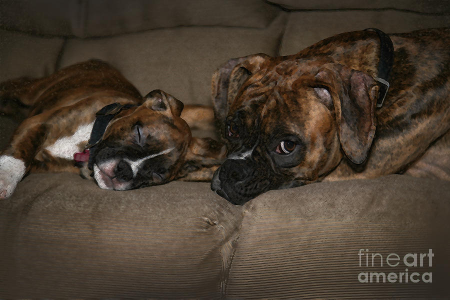Boxers At Rest Photograph