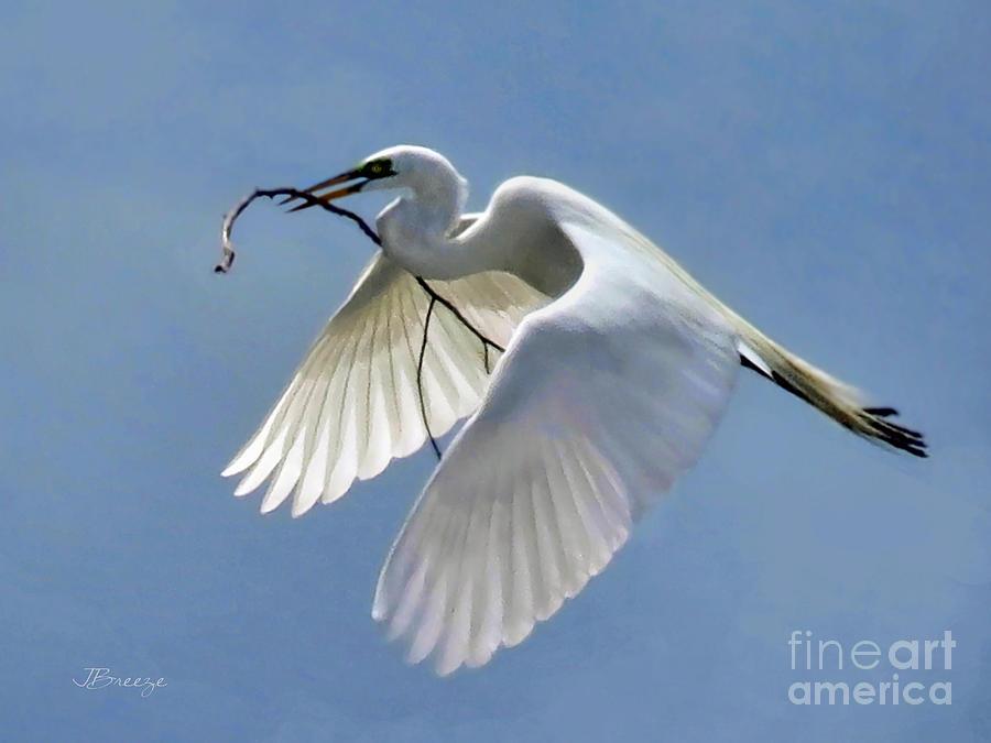 Egret Photograph - Branch Of Peace by Jennie Breeze