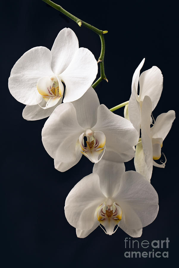 orchids wallpaper for iphone