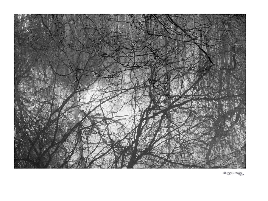 Branch Reflections Photograph  - Branch Reflections Fine Art Print