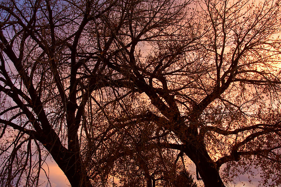 Branching Out At Sunset Photograph