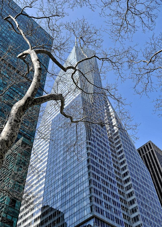 Nyc Photograph - Branching Out by Tony Ambrosio